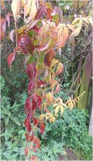 FOTKA - pnoucí listy podzimní