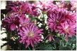 pěkný květ, pěkná barva