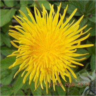 FOTKA - květnový střapáček