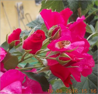 FOTKA - já chci znovu tuto krásu na zahradě