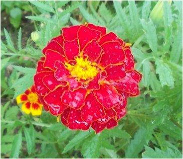 FOTKA - malý květ je schovaný pod velkým