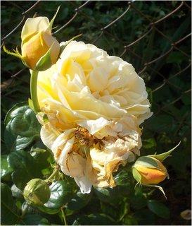 FOTKA - v zajetí uschlého květu
