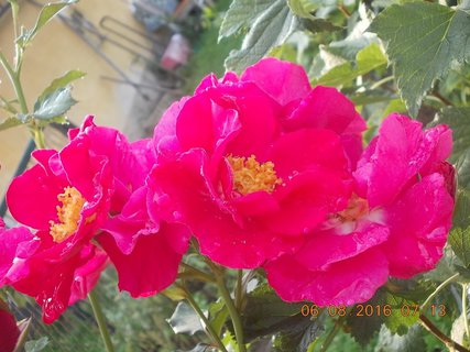 FOTKA - květ vedle květu namačkaný