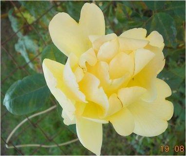 FOTKA - zajímavě byl rozkvetlý květ