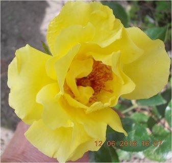 FOTKA - kuk do středu, musela jsem držet květ, byl vichr