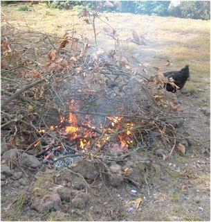 FOTKA - suché větve pěkně hořely
