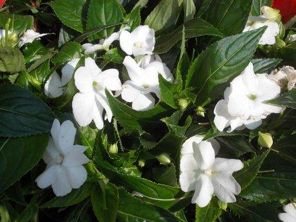FOTKA - bělounké květy na jaře u obchodu
