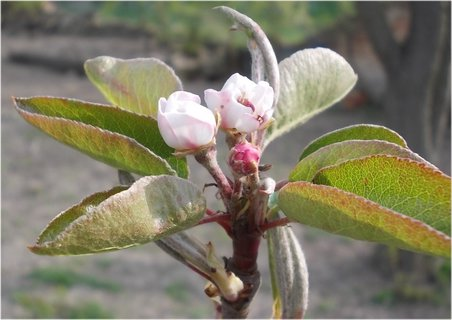 FOTKA - konec větývky na jaře