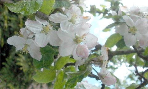 FOTKA - kouzlo ze stromu na jaře