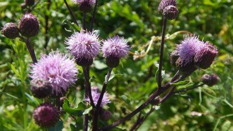 FOTKA - fialová v louce