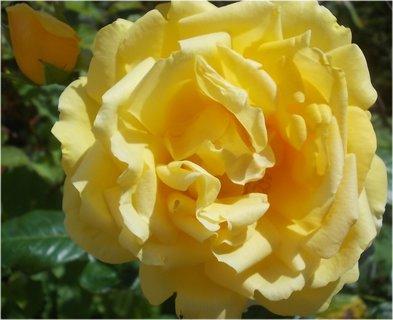 FOTKA - jako kudrnátý je květ
