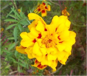 FOTKA - s malým množstvím červené barvy ve žluté barvě