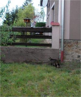 FOTKA - kocour se chystá na návštěvu k sousedům