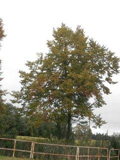 FOTKA - podzim za rybníkem