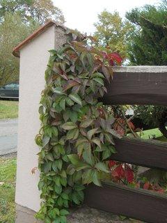 FOTKA - na plotě sousedů