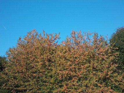 FOTKA - podzimní téma