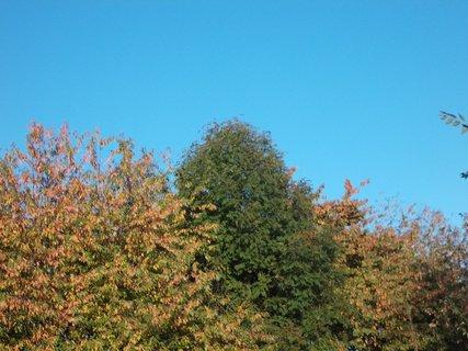 FOTKA - zelený strom se vyjímá v barevnosti okolo