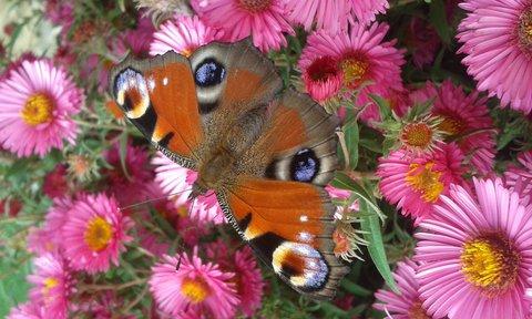 FOTKA - motýl