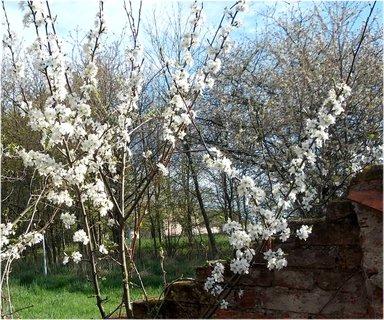FOTKA - dubnové jaro