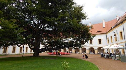 FOTKA - chráněný strom na nádvoří