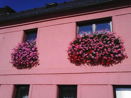 FOTKA - okna s krásně kvetoucími muškáty