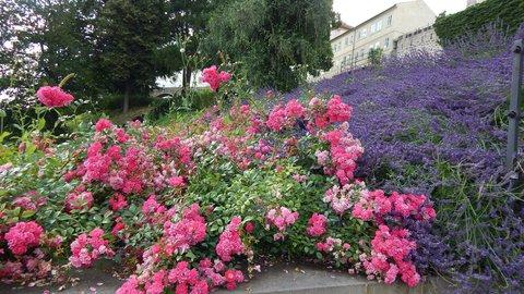 FOTKA - vůně růží a levandule