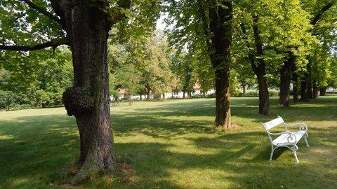 FOTKA - odpočinek ve stínu stromů