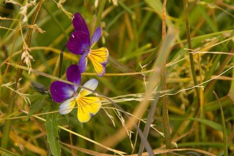 FOTKA - Z Asitz na Geierkogel - Květinky