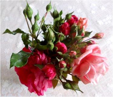 FOTKA - hezký pohled doma na růže