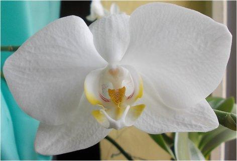 FOTKA - krása orch. v detailu