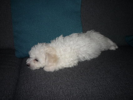 FOTKA - ...a ten gauč je od ted můj...