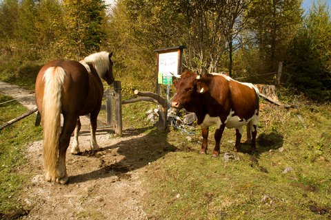 FOTKA - Poslední letošní výšlap na Steinalm - Uvítací výbor