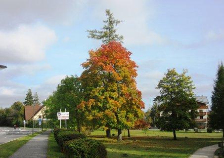 FOTKA - podzim v Tatranské Lomnici