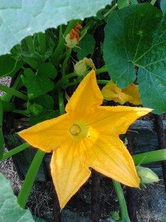 FOTKA - květ hokaido
