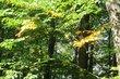 v září v lese