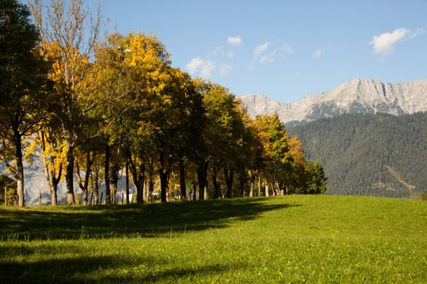 FOTKA - Podzimní procházka okolo Ritzensee - Alej