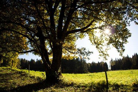FOTKA - Podzimní procházka okolo Ritzensee - Pod stromem