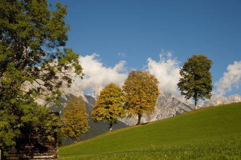 FOTKA - Podzimní procházka okolo Ritzensee - Čtyři stromy