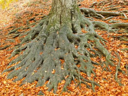 FOTKA - Spleť kořenů