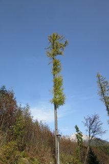 FOTKA - Strom od severu bez větví