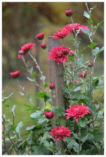 FOTKA - kvete drobná listopadka