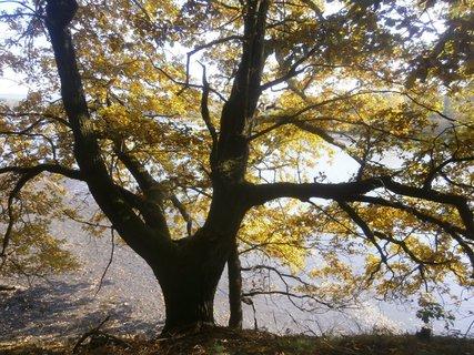 FOTKA - Podzimní.....