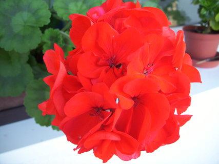 FOTKA - Listopad a ještě kvetou