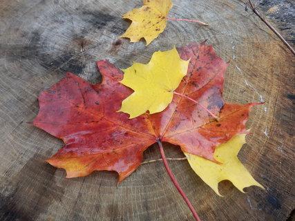 FOTKA - podzim je tady...