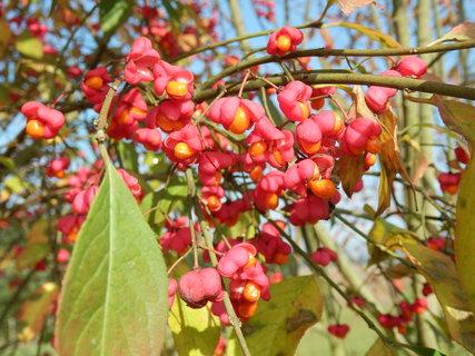 FOTKA - krásné podzimní procházky