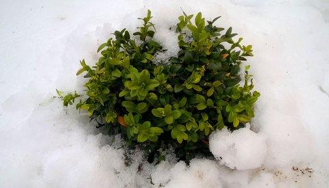 FOTKA - ve sněhovém objetí
