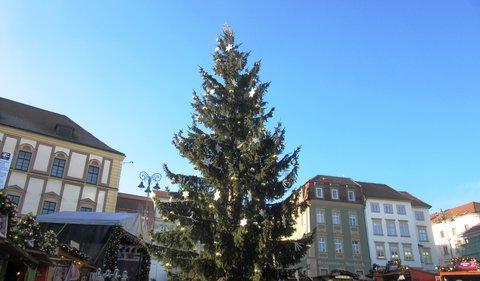 FOTKA - strom na Zelném trhu