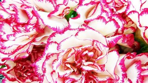 FOTKA - detail květů karafiátů