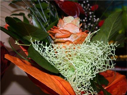 FOTKA - Kytica kvetov