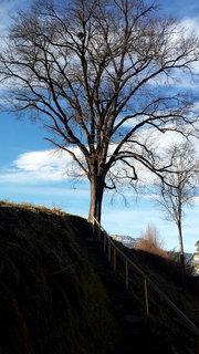 FOTKA - Letos asi naposledy na Ritzensee - Cestičkou ke stromu